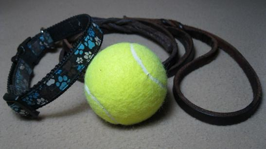Dog leash with tennis ball