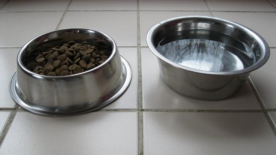 Pet food and water bowls